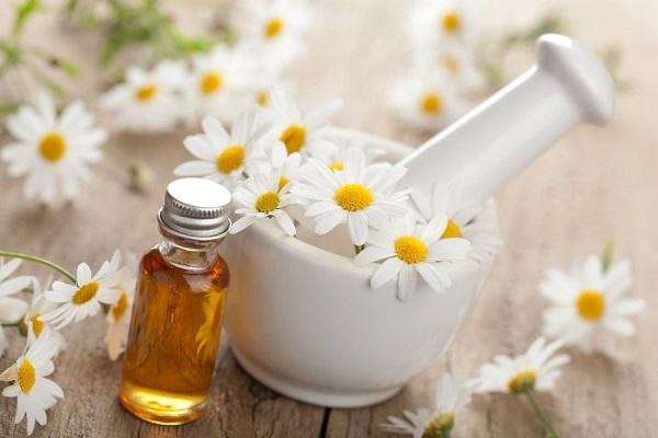Цветки и масло ромашки